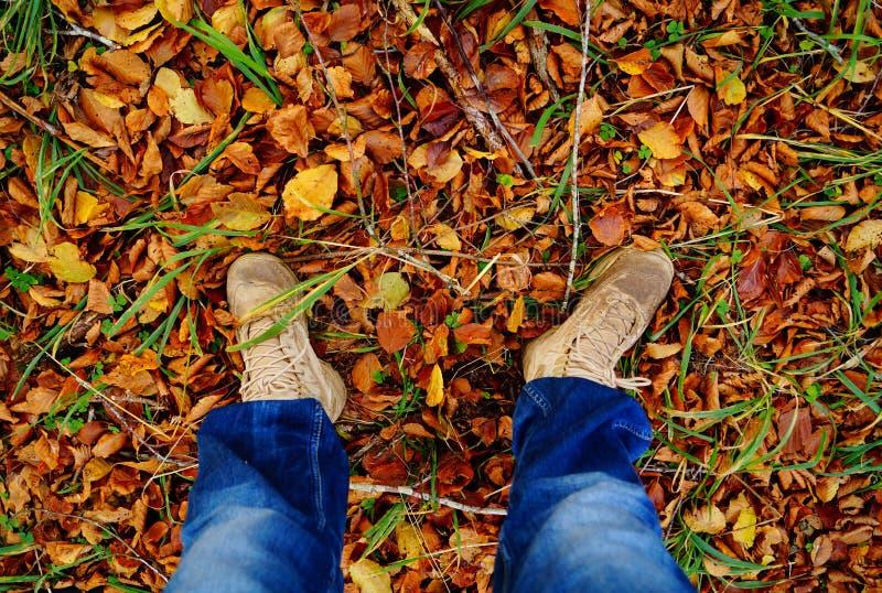 Con i piedi che stanno sulle foglie fotografia stock libera da diritti
