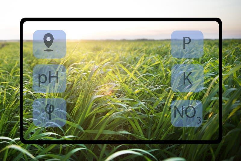 Con la ayuda de la tableta determinar el estado del campo y de las plantas plantados en él Cultivo elegante imagenes de archivo