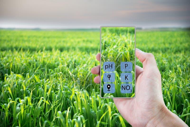 Con la ayuda de un smartphone determinar el estado del campo y de las plantas plantados en él Cultivo elegante imagen de archivo libre de regalías