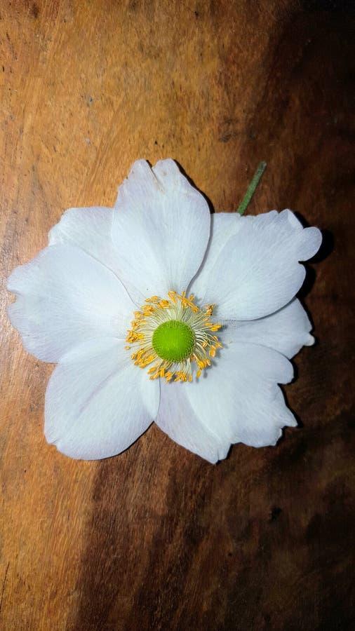Con la flor foto de archivo libre de regalías