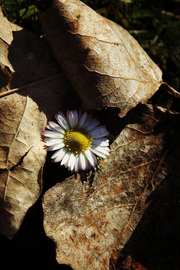 Con la flor foto de archivo