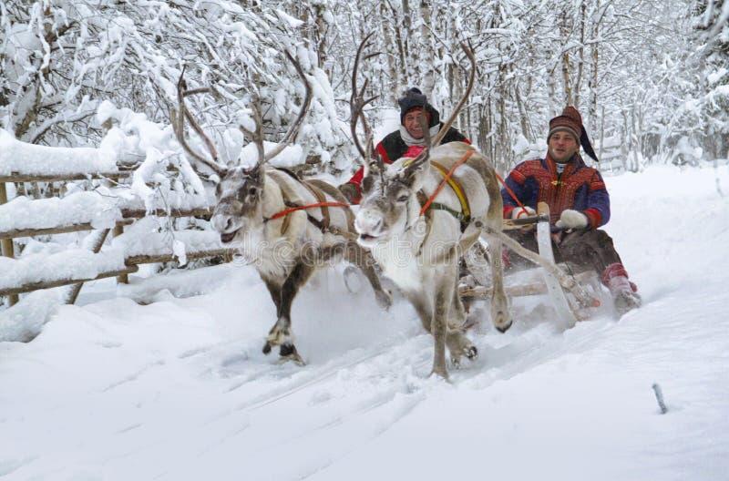 Con la slitta delle renne nella neve, Rovaniemi, Lapland, Finlandia immagini stock