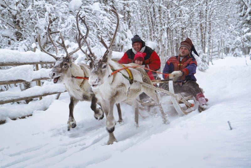 Con la slitta delle renne nella neve, Rovaniemi, Lapland, Finlandia immagine stock