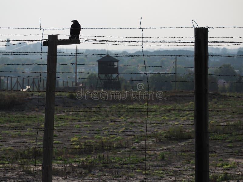 Raven in Majdanek concentration camp stock image