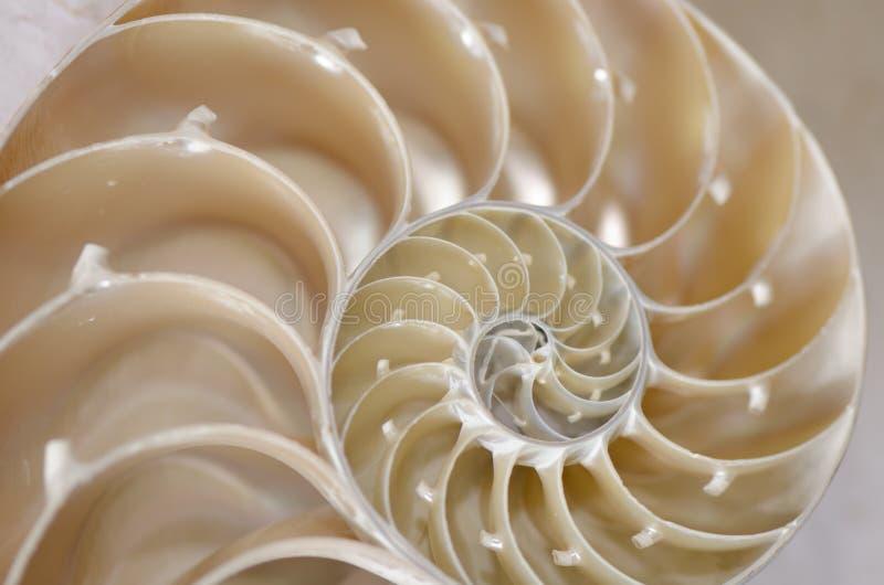 Conca della lumaca di mare immagini stock libere da diritti