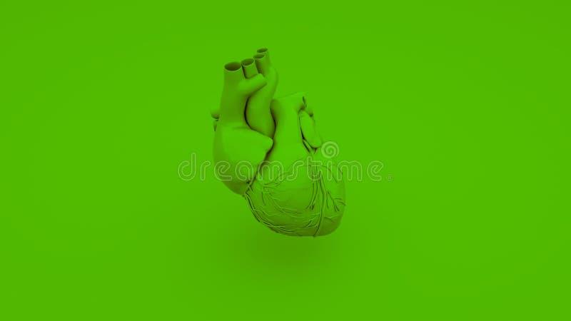 Conceito anatômico verde do coração ilustração 3D ilustração royalty free