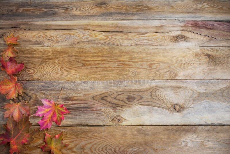 Conceito da ação de graças com as folhas de bordo coloridas da queda em de madeira imagens de stock