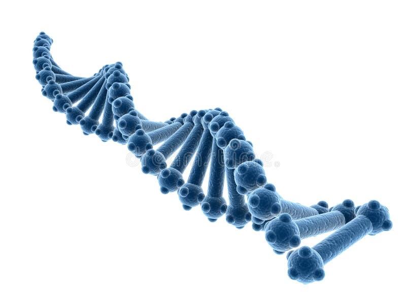 Conceito da bioquímica com a molécula do ADN isolada no fundo branco, rendição 3d ilustração stock