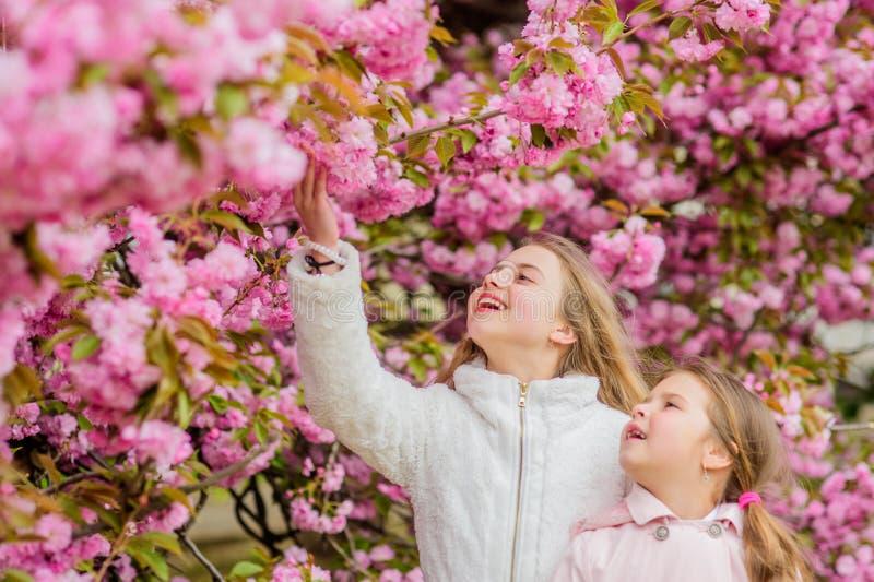 Conceito da Bot?nica Nuvens cor-de-rosa macias das flores As crian?as apreciam a mola morna Meninas que levantam perto de sakura  imagens de stock
