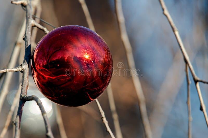 Conceito da decoração do feriado de inverno: Árvore despida sem folhas decoradas com as bolas do vintage do Natal foto de stock royalty free