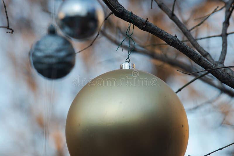 Conceito da decoração do feriado de inverno: Árvore despida sem folhas decoradas com as bolas do vintage do Natal foto de stock
