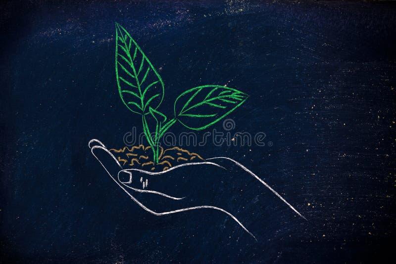 Conceito da economia verde, mãos que guardam a planta nova foto de stock royalty free