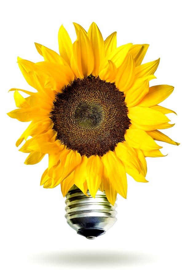 Conceito da energia renovável com girassol imagem de stock royalty free