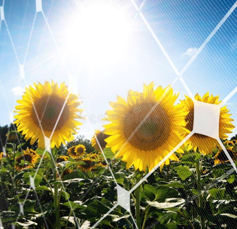 Conceito da energia solar fotografia de stock