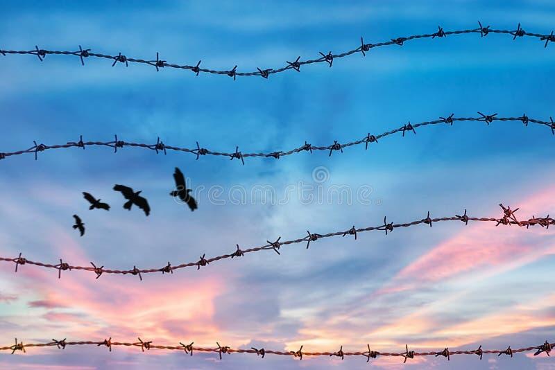 Conceito da liberdade e dos direitos humanos silhueta do voo livre do pássaro no céu atrás do arame farpado com fundo do por do s fotografia de stock