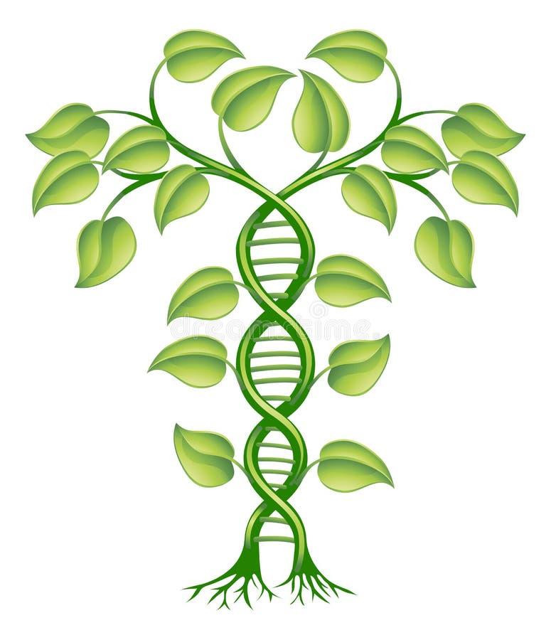 Conceito da planta do ADN ilustração do vetor