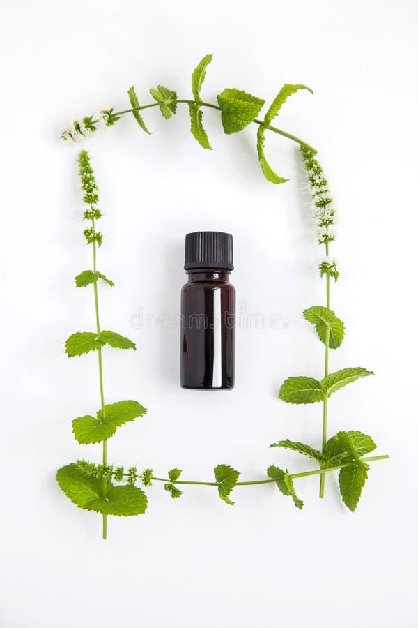 Conceito da saúde e do fitoterapia com ramos verdes da hortelã no fundo branco, vista superior imagens de stock royalty free