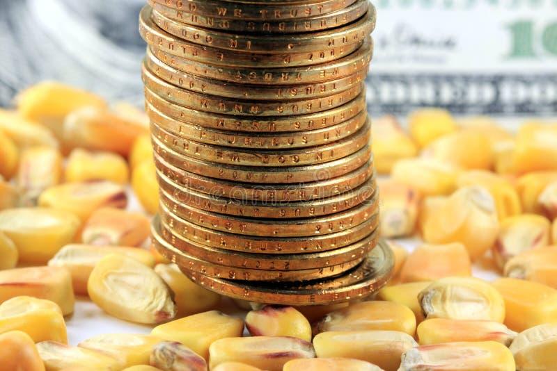Conceito da troca de mercadoria - moeda dos E.U. das moedas de ouro com milho amarelo imagem de stock royalty free
