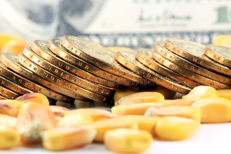 Conceito da troca de mercadoria - moeda dos E.U. das moedas de ouro com milho amarelo fotografia de stock royalty free