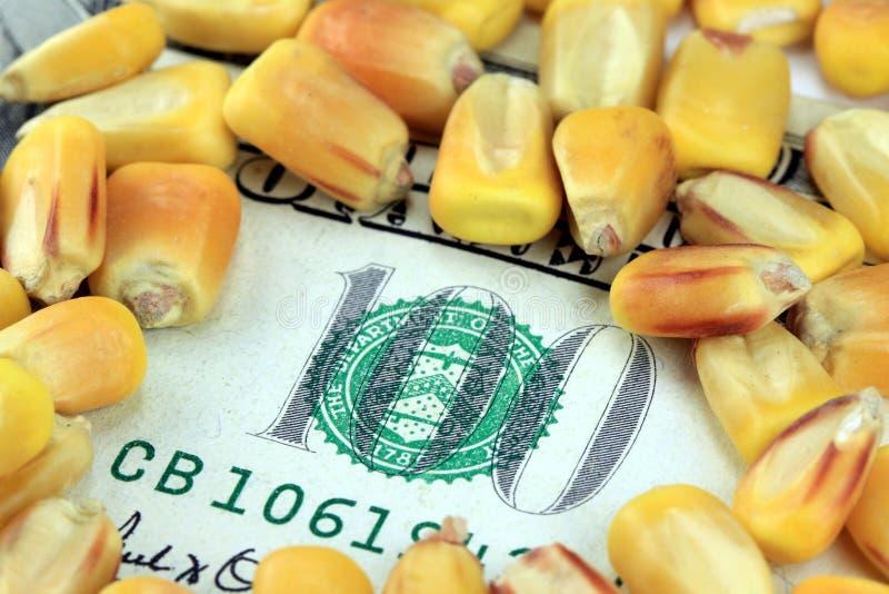 Conceito da troca de mercadoria - nota de dólar da moeda cem dos E.U. com milho amarelo foto de stock royalty free