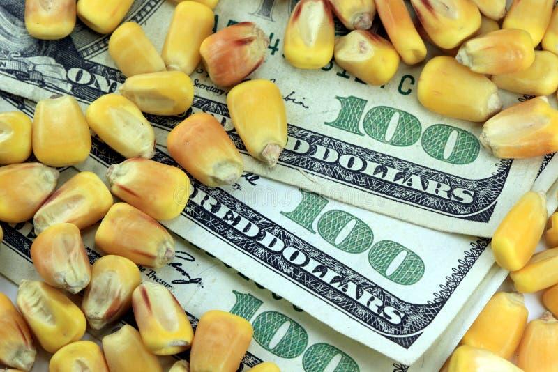 Conceito da troca de mercadoria - nota de dólar da moeda cem dos E.U. com milho amarelo imagem de stock royalty free
