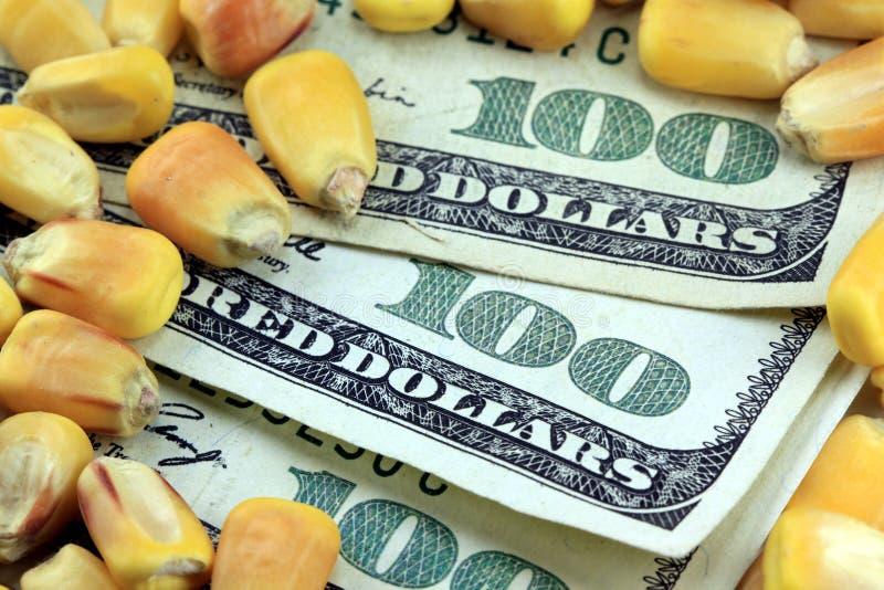 Conceito da troca de mercadoria - nota de dólar da moeda cem dos E.U. com milho amarelo imagens de stock royalty free