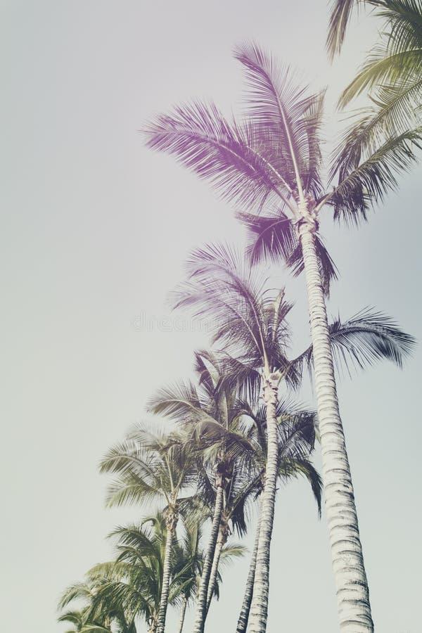 Conceito das férias do curso do verão Palmas bonitas na parte traseira do céu azul foto de stock royalty free