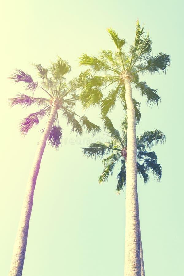Conceito das férias do curso do verão Palmas bonitas na parte traseira do céu azul foto de stock