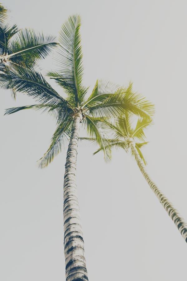 Conceito das férias do curso do verão Palmas bonitas na parte traseira do céu azul fotografia de stock