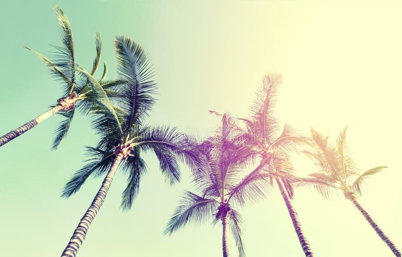 Conceito das férias do curso do verão Palmas bonitas na parte traseira do céu azul imagens de stock royalty free