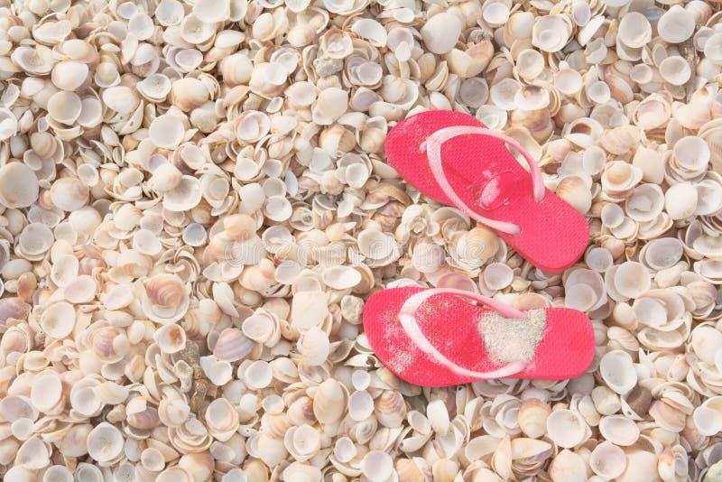 Conceito das férias, fundo tropical da praia das conchas do mar com falhanços de aletas fotografia de stock royalty free