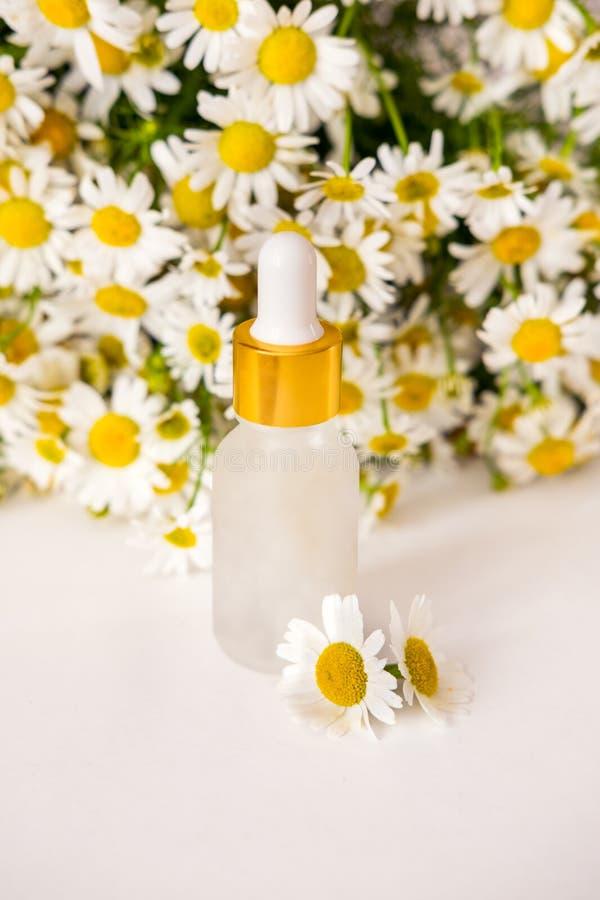 Conceito das flores e do cosmético orgânico Óleo essencial da camomila na garrafa de vidro com as flores frescas da camomila fotografia de stock royalty free