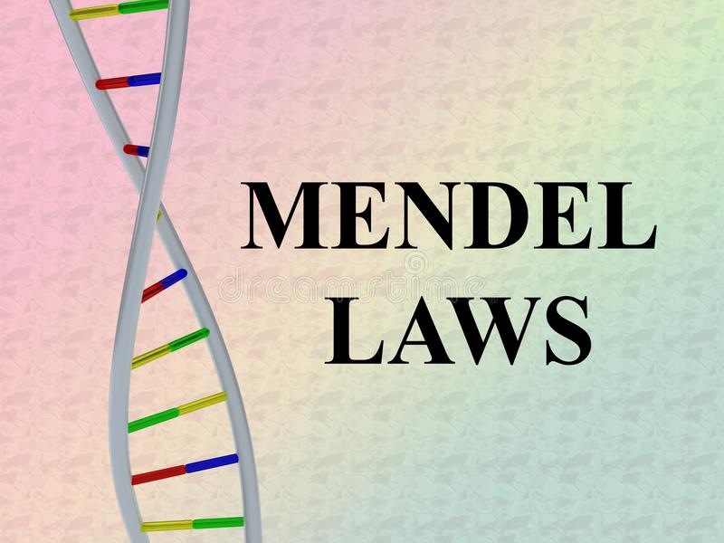 Conceito das LEIS de MENDEL ilustração do vetor