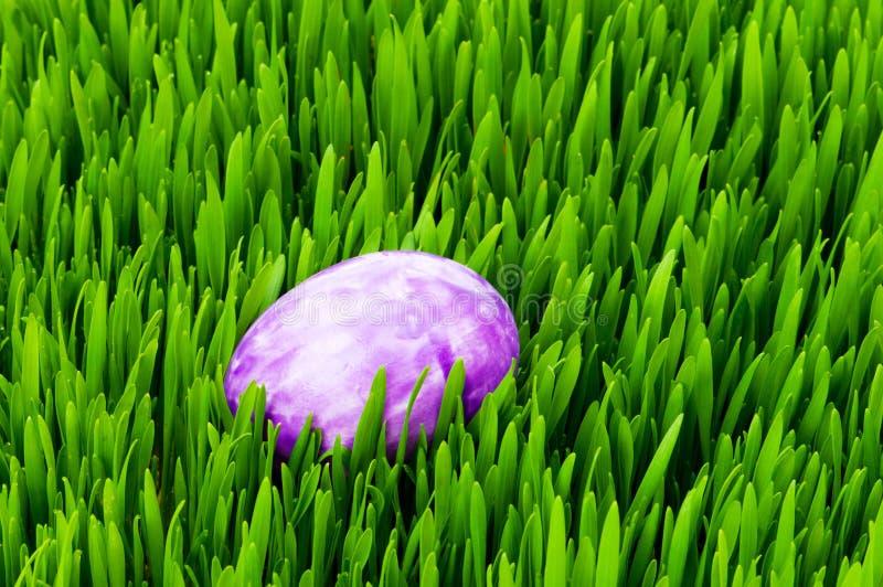 Download Conceito De Easter - Ovos Coloridos Na Grama Imagem de Stock - Imagem de alaranjado, cultura: 12811551