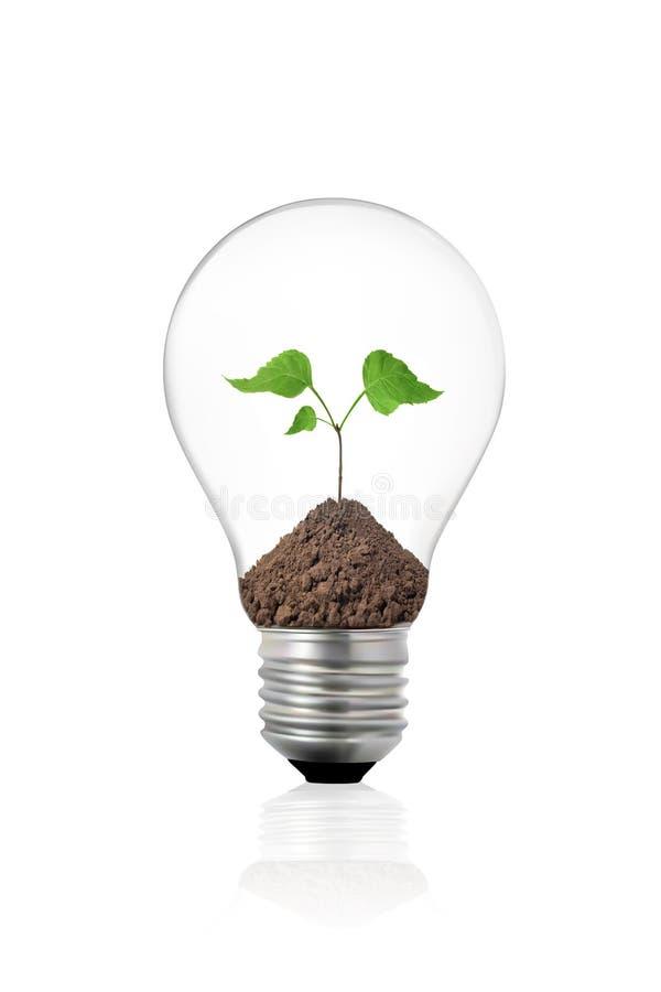 Conceito de Eco: ampola com planta verde para dentro imagem de stock royalty free