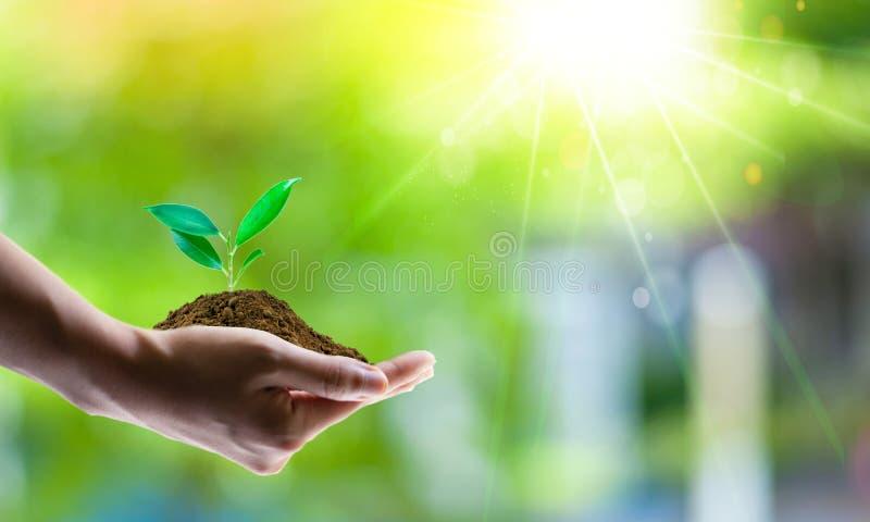 Conceito de salvamento da energia com terra verde e plantação de árvores em voluntários foto de stock