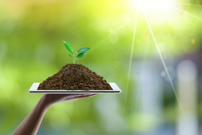 Conceito de salvamento da energia com terra verde e plantação de árvores nas mãos dos voluntários imagens de stock