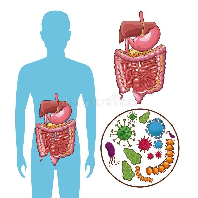 Conceito de sistema digestivo ilustração royalty free