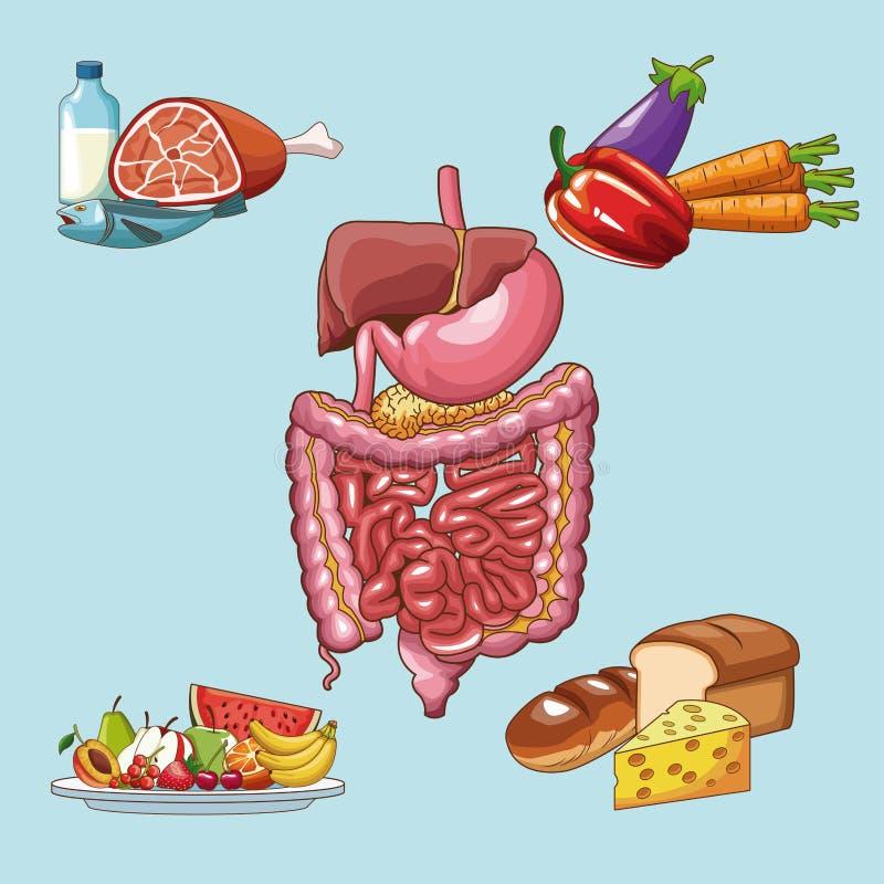 Conceito de sistema digestivo ilustração do vetor