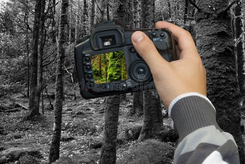 Conceito do ambiente foto de stock royalty free