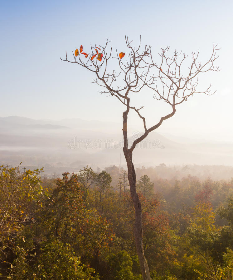 Conceito do aquecimento global A árvore inoperante só sob o céu dramático do por do sol da noite na seca rachou a paisagem do des fotografia de stock