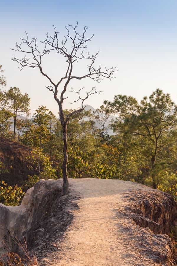 Conceito do aquecimento global A árvore inoperante só sob o céu dramático do por do sol da noite na seca rachou a paisagem do des foto de stock