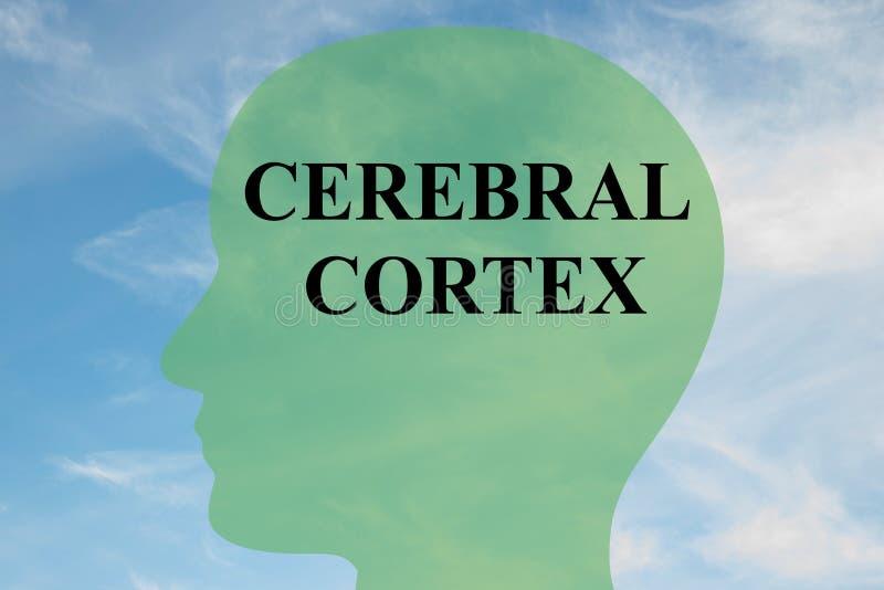 Conceito do córtice cerebral ilustração royalty free