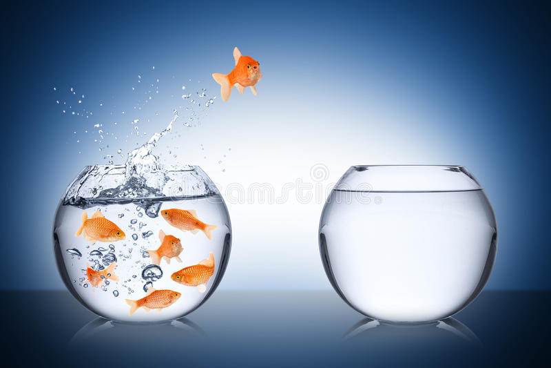 Conceito do escape dos peixes imagem de stock