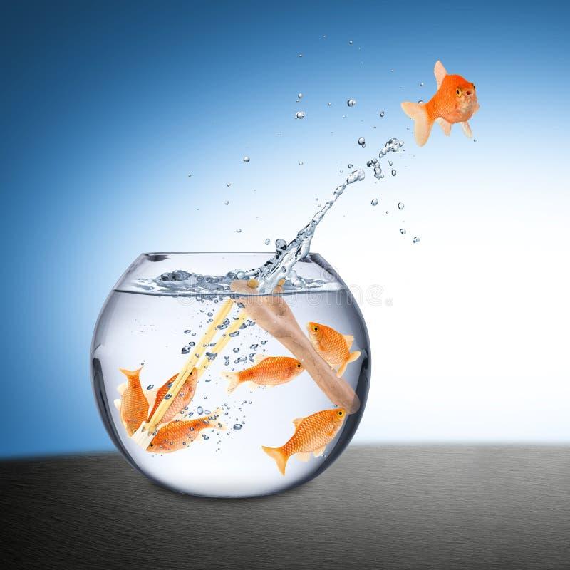Conceito do escape dos peixes fotografia de stock