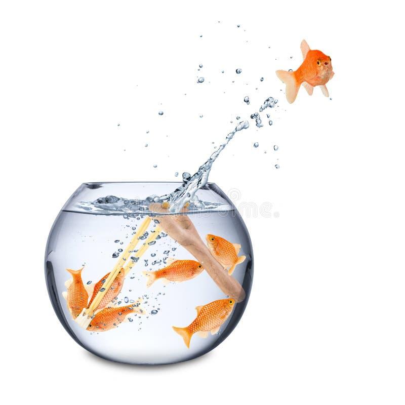 Conceito do escape dos peixes fotografia de stock royalty free