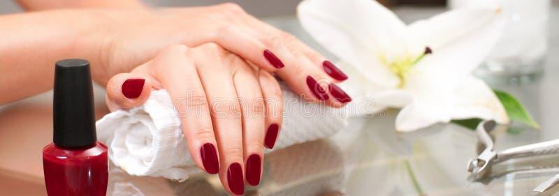 Conceito do Manicure Woman& bonito x27; mãos de s com tratamento de mãos perfeito no salão de beleza imagens de stock