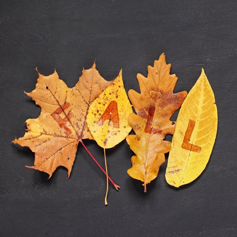 Conceito do outono Folhas amarelas ca?das das ?rvores do bordo, do ?lamo, do carvalho e de salgueiro com QUEDA da inscri??o no fu fotos de stock