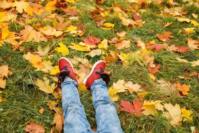 Conceito do outono Pés que vestem sapatas vermelhas na grama verde fotos de stock