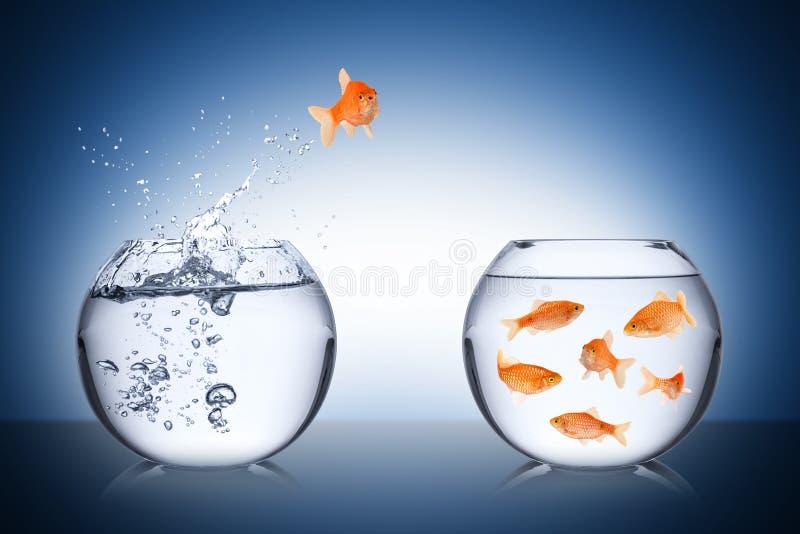 Conceito do retorno dos peixes fotos de stock
